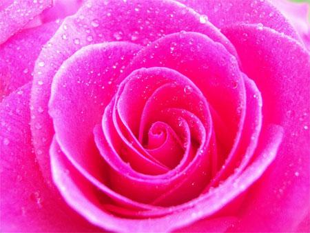 pink-boja