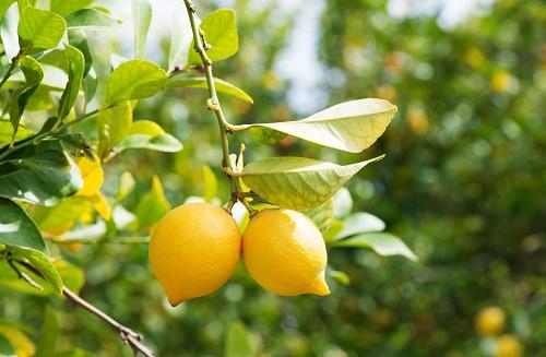Limun za zdrave nokte