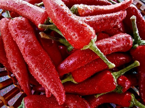 crvene ljute paprike